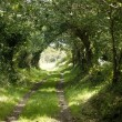 Foto Stock: Country lane