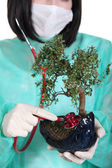 Doctor pruning bonsai tree — Stock Photo
