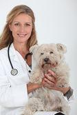 Vétérinaire de dame avec un petit chien blanc sale — Photo