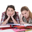 Foto Stock: Two female friends revising together