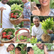 Montage of a couple picking produce — Stock Photo