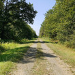 Road in the forest — Stock Photo #18407067