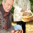 Elderly couple collecting chestnuts — Stock Photo