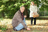 Senior couple gathering mushrooms — Stock Photo