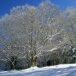 Stock Photo: Snowy trees