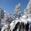 Stock Photo: Snow covered scenery