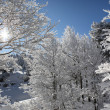Snow covered trees — Stock Photo #18434853