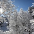 Snow covered trees - Stock Photo