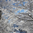 Snow covered branches — 图库照片 #18434869