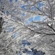 雪の覆われた枝 — ストック写真