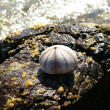 图库照片: Seashell resting on rock