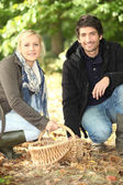 Couple gathering chestnuts — Stock Photo