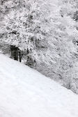 Hill in winter — Stock Photo