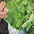 Woman looking bunch of grapes — Stockfoto