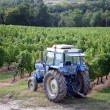 Stock Photo: Tractor in vine field