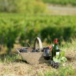 Wine basket in a vineyard — Stock Photo