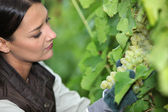 Woman looking bunch of grapes — Stock Photo