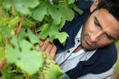 Man tending vines — Stock Photo