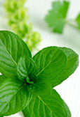 Close-up shot of fresh spearmint — Stock Photo