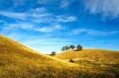 Beautiful yellow hills — Stock Photo