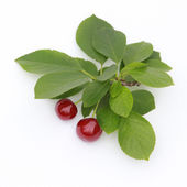 Twin Red Cherries — Stock Photo