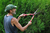 Man pruning — Stock Photo