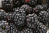 Blackberries — Стоковое фото