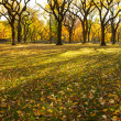 Stock Photo: Autumn in Central Park New York