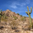 Stock Photo: Saguaro Cactus in Hills near Scottsdale