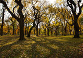 Autumn in Central Park New York — Stock Photo