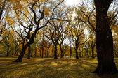 Fall in Central Park New York — 图库照片