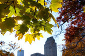 Early Fall in Central Park New York — Stock Photo