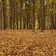 Leaves in the Woods during Autumn — Stock Photo