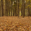 Leaves in the Woods during Autumn — Stockfoto