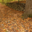 Forest Path in Autumn — Stock Photo