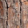 Pine Tree Bark for Background — Stock Photo