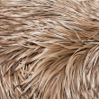 Emu feathers up close — Stock Photo #38318133