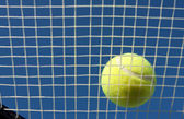 Tennis Ball on the racket strings — 图库照片