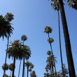 Palm Trees near Beverly Hills — Stock Photo