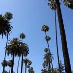 Palm Trees near Beverly Hills — Stock Photo