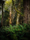 Old Growth Forest — Stock Photo