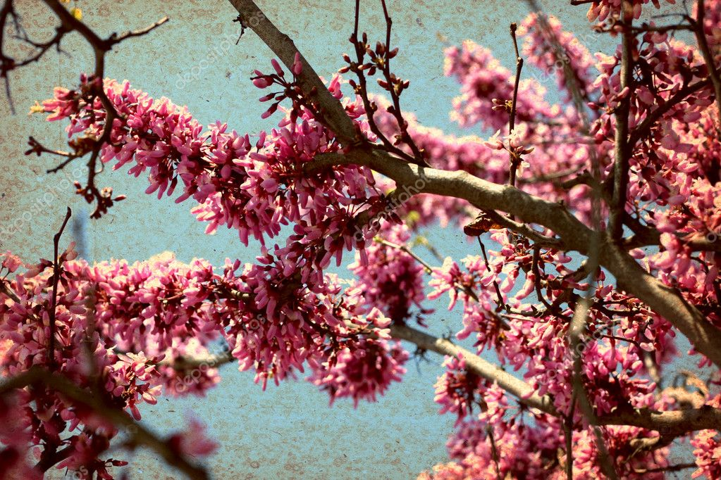 Grunge image of flowers on a background of the sky — Stock Photo #13157592
