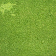 Word map on green grass texture and background — Stock Photo #12519511