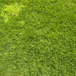 World map icon on green grass texture and background — Stock Photo