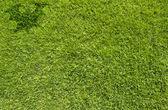Murciélago de halloween en la textura de la hierba verde y fondo — Foto de Stock