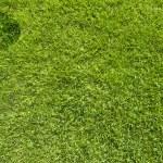 calabaza de Halloween en la textura de la hierba verde y fondo — Foto de Stock