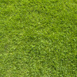 Bulb light on green grass texture and background — Stock Photo #12755073