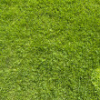 Heart icon on green grass texture and background - Stock Photo