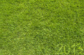 Green grass of 2013 year texture and background — Stock Photo