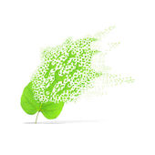 Green leaf of wrench on white background — Stock Photo